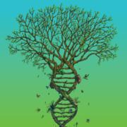 biodescodificacion descodificacion biologica marbella